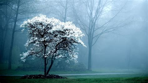 Background Images Of Trees by Lone Snow White Tree Hd Wallpapers