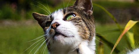 bayer katzende