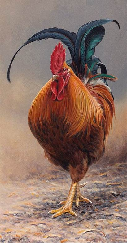 Rooster Chicken Chickens Painting Roosters Backyard Galli