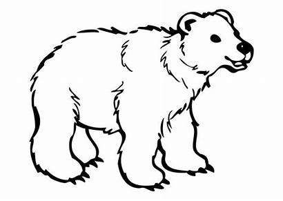 Bear Coloring Polar Beer Kleurplaat Clipart Clip