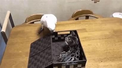 Parrot Box Kitten Lid Unexpected Inside Cat
