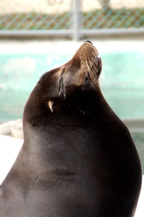 cute marine mammals  pics izismilecom