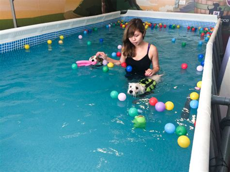 5 Dog Swimming Pools In Singapore