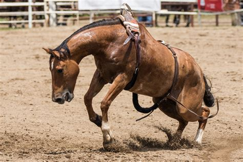 horse anxiety separation horses causes management