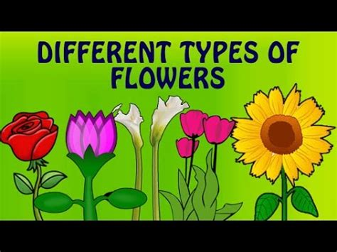 learn flower names with pictures different types 803 | hqdefault