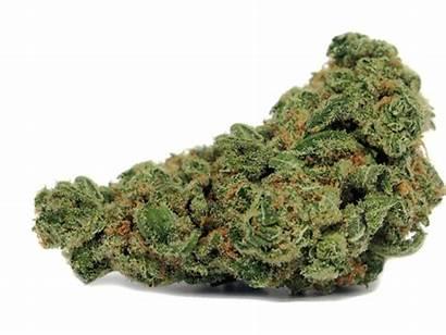 Strains Cannabis Christmas Nhs Picks Medical Staff