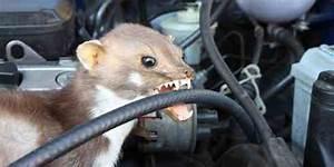Marder Im Auto : marderschaden was zahlt meine kfz versicherung und welche mittel helfen frag peter ~ Yasmunasinghe.com Haus und Dekorationen