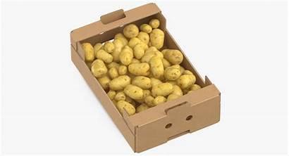Cardboard Potatoes Clean Models
