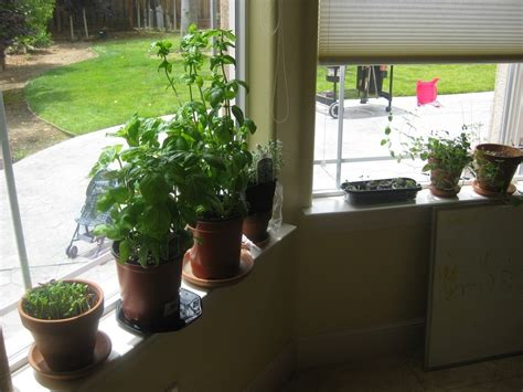 how to start an indoor garden room