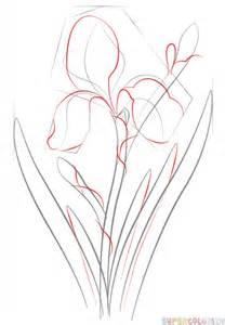 Iris Flower Drawings Step by Step