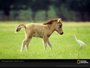Cute Baby Farm Animals | Amazing Wallpapers