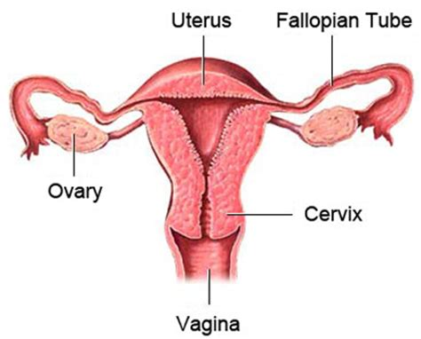 Hysterectomy Atlanta - Benefits, Techniques and Recovery