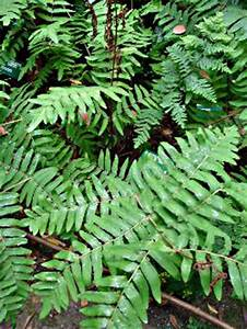 Plante Ombre Exterieur : les plantes de l 39 ombre ~ Carolinahurricanesstore.com Idées de Décoration