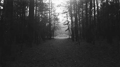 Forest Landscape Night Nature Trees Wallpapers Monochrome