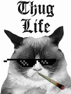 """""""Thug Life Cat"""" Stickers by HeadOut Redbubble"""