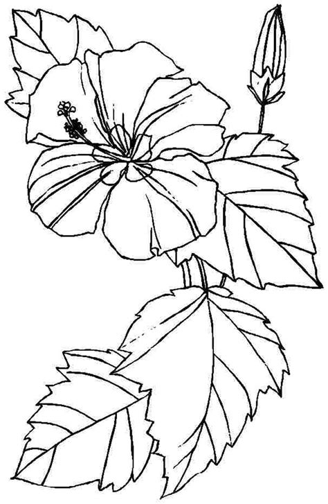 Coloring Flower by Free Printable Hibiscus Coloring Pages For