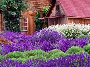 Lavender Cottage Wallpaper and Background