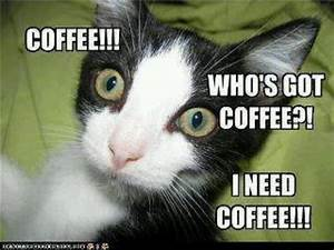 I Need Coffee Quotes. QuotesGram