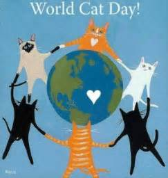 world cat day a perspective my learning