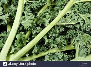 Curly Kale Cavolo nero leaves and stalks Stock Photo ...