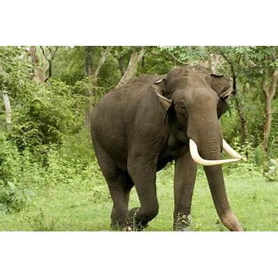Elephant – mpmurthy