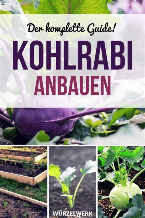 bohnen anbauen anleitung bohnen pflanzen anleitung zum anbauen bohnen bluetripodphoto ml