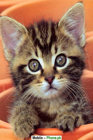 cute cats  kittens wallpapers mobile pics