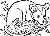 Opossum Coloring Clipart Coloriage Popular Library sketch template