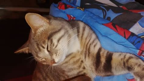 how to de stress you cat how to reduce stress in cats with pictures wikihow