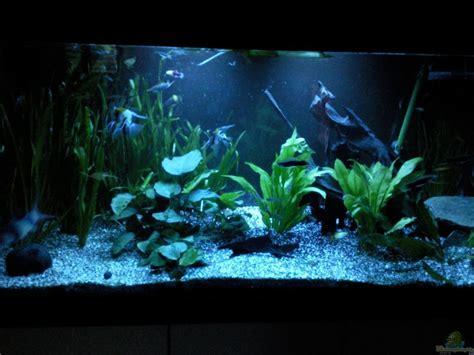 Aquarium Im Wohnzimmer by Aquarium Ak1982 Im Wohnzimmer