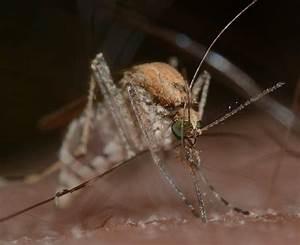 Mücken Vertreiben Hausmittel : hausmittel gegen m ckenstiche insektenstiche ~ Markanthonyermac.com Haus und Dekorationen