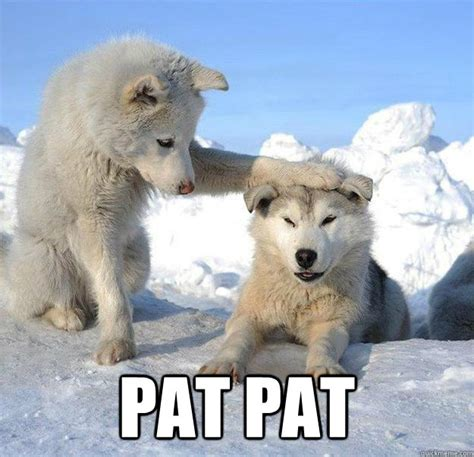 Pat Meme - pat pat caring husky quickmeme