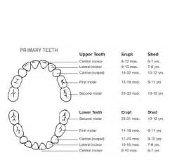 Dental Primary Tooth Chart Printable