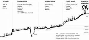 1 Indicative Uk Intertidal Mudflat And Saltmarsh Profile
