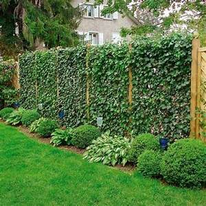 Immergrüne Kletterpflanze Für Zaun : sichtschutzzaun schutz und stil umgeben das haus ~ Michelbontemps.com Haus und Dekorationen