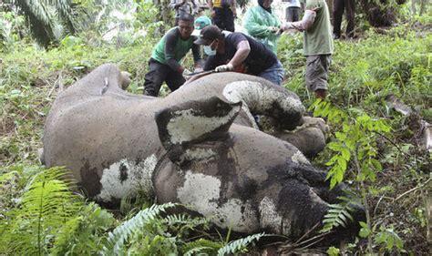 elephant electrocuted  death   desperate search