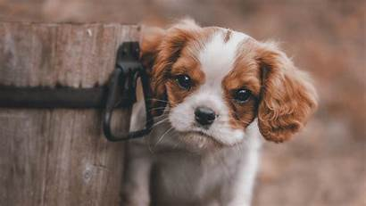 Wallpapers Puppy 4k Puppies Background Animals Dog