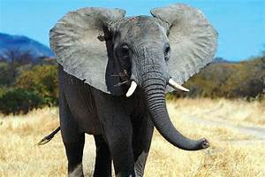 East Africa overland: Wild encounters, majestic ...