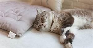 Comme On Fait Son Lit On Se Couche : le sommeil du chat comportement du chat wamiz ~ Melissatoandfro.com Idées de Décoration