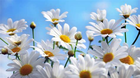 Summer Flowers Wallpapers