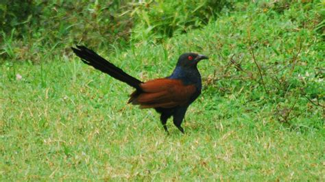 common birds  kerala top   beautiful  india