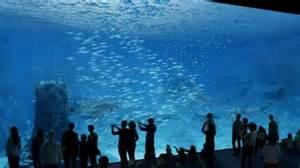 nausicaa la baie vitr 233 e du futur aquarium g 233 ant est arriv 233 e 3 nord pas de calais