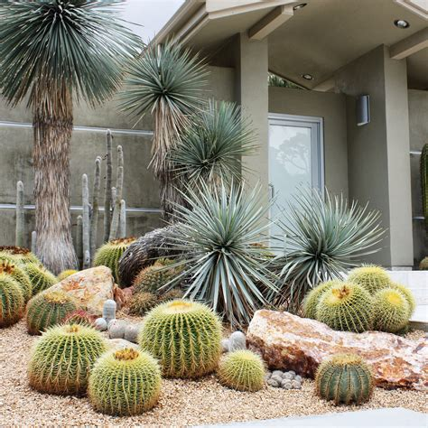 ways  design  cactus sunset magazine