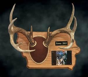 deer plaque templates bing images With antler plaque template