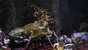 Detritus Feeders Animals Plants In The Hadal Zone Sciencing