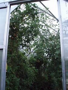 11 Pflanzen Methode : tomaten selbst auss en mein sch ner garten forum ~ Lizthompson.info Haus und Dekorationen