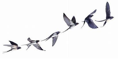 Burung Walet Pesawat Gudang Gambar Penerbangan Kartun