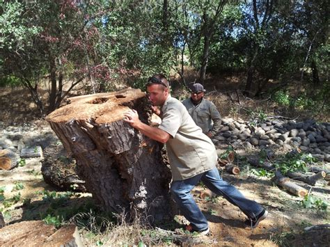 kent arborist tree removal stump granite bay