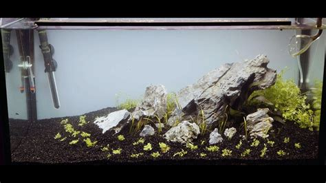 Setting Aquascape by 112l Iwagumi Aquascape Set Up