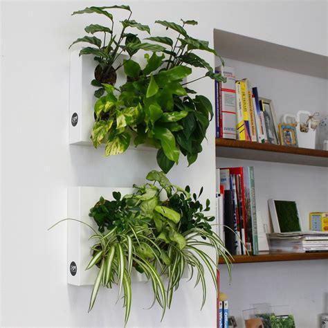 giardino verticale crea il tuo giardino verticale idee giardinieri